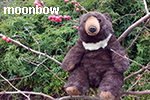 Moonbow the Sun Bear