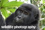 Monica Max West wildlife photography